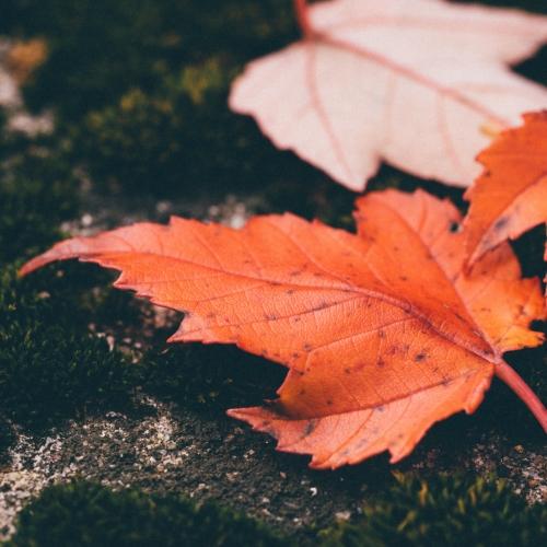 SAD - leaves